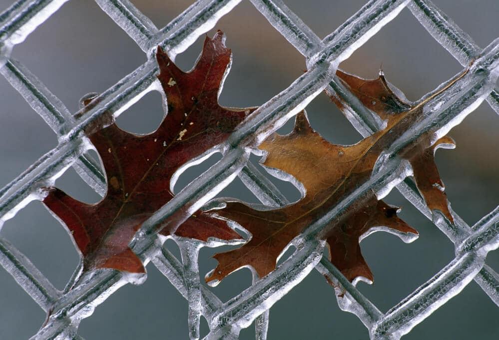 Leaves on Frozen Fence | BigEasyFences